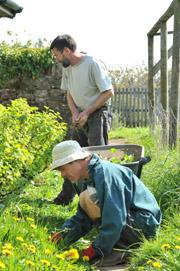 People tending plants in the garden